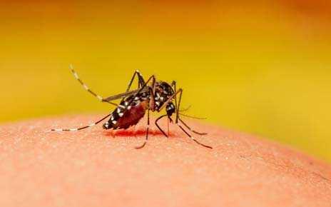 Szúnyog-frász: Szívférgesség, bőrférgesség